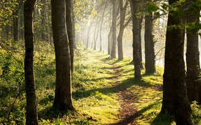 Picture forest, summer, trees, nature, trail, sunlight