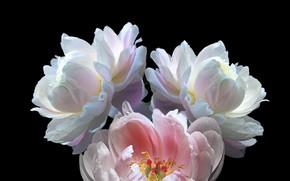 Picture Flower, plant, petals