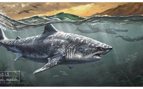 Picture Shark, Whales, Megalodon