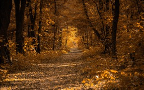 Picture road, autumn, forest, leaves, trees, Park, alley
