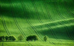 Picture Nature, Green, Field, Trees, Meadow