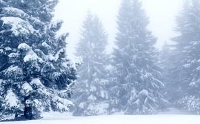 Picture winter, snow, trees, landscape, winter, tree, landscape, nature, beautiful, winter, snow, fir tree