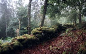 Picture forest, nature, fog