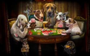 Picture dogs, card, look, the dark background, rendering, table, room, stay, the game, beer, money, dog, …