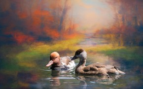 Picture autumn, landscape, birds, nature, two, photoshop, duck, treatment, picture, pair, Duo, duck, pond, swimming, two …