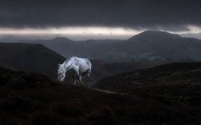 Picture mountains, rain, horse