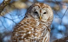 Picture look, branches, owl, bird, portrait, bokeh, owl