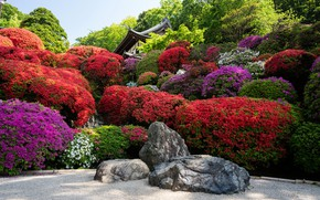 Picture stones, Japan, garden, Japan, Kyoto, Kyoto, flowers, garden, stones, rhododendron
