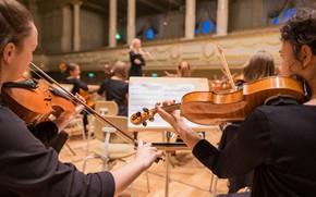 Picture Concert, Musicians, Hall, Скрипки, Оркестр