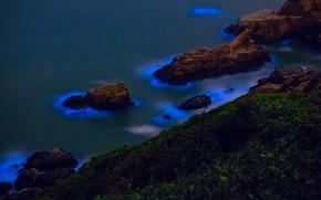 Picture bioluminescent algae, The Taiwan Strait, the Islands of matsu