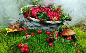 Picture autumn, forest, smoke, mushroom, moss, harvest, basket, cranberries