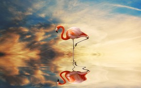 Picture sunset, reflection, bird, pond, lonely, pink flamingos, photoart