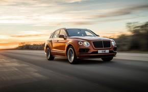 Picture machine, asphalt, movement, lights, speed, Bentley, optics, Speed, crossover, Bentayga