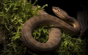 Picture nature, snake, reptile, cold-blooded animal