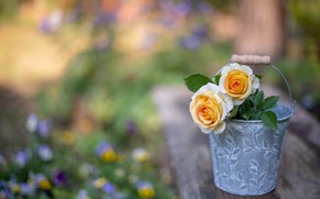 Picture flowers, roses, bucket