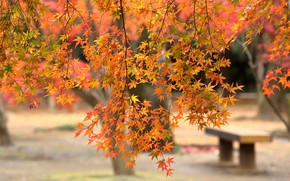 Picture autumn, leaves, trees, branches, Park, foliage, shop, bokeh