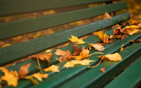 Picture autumn, bench, Board, yellow, falling leaves, maple, autumn leaves, лваочка