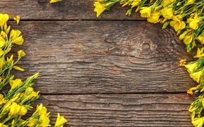Picture flowers, yellow, yellow, wood, flowers, spring