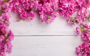 Picture flowers, pink, wood, pink, flowers, spring