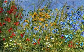 Picture grass, flowers, nature, picture, Strolling the Biltmore, Jeff Hanson, Jeff Hanson