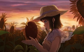 Picture field, sunflowers, the evening, girl