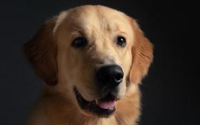 Picture each, portrait, dog
