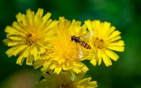 Picture flowers, bokeh, fly-gorzalka