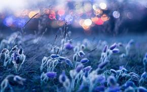 Picture macro, light, flowers, bokeh, dream grass