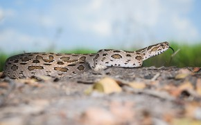 Picture language, nature, background, snake, crawling, reptile, spotted