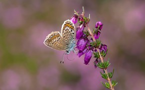 Picture macro, flowers, sprig, butterfly, pink, pink background, Heather