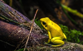 Picture branches, the dark background, leaf, frog, yellow, bokeh, reptile