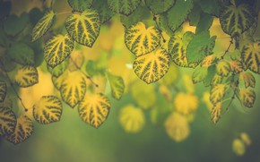 Picture leaves, macro, branches, foliage