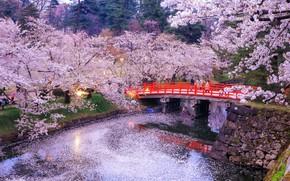 Picture trees, bridge, nature, lights, reflection, river, the evening, Japan, Sakura, Japan, bridge, tree, evening