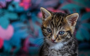 Picture cat, look, abstraction, kitty, grey, background, pink, blue, pattern, baby, kitty, face, striped, blurred, blue-eyed