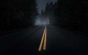 Picture road, forest, asphalt, fog, twilight