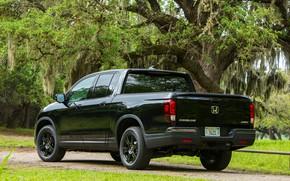 Picture trees, black, back, Honda, side, pickup, Black Edition, Ridgeline, 2019