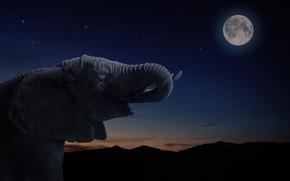 Picture stars, night, elephant, The moon, moon, night, stars, elephant, Jackson Carvalho