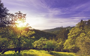 Picture forest, the sky, the sun, clouds, trees, sunset, mountains, nature