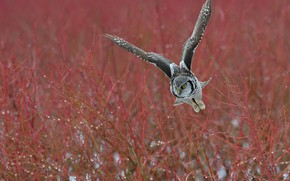 Picture autumn, flight, branches, owl, bird, owl
