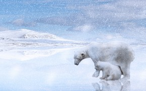 Picture winter, snow, reflection, rendering, hills, shore, baby, bear, pair, bear, white, light background, Blizzard, snowfall, …