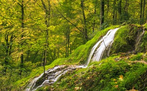 Picture Nature, Waterfall, Trees, River, Forest, Stream