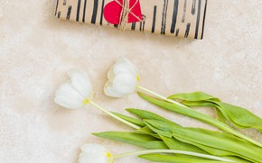 Picture background, gift, bouquet, tulips, white