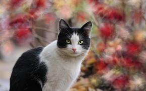 Picture autumn, cat, background