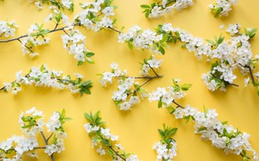 Picture flowers, branches, yellow, cherry, background
