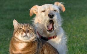 Picture cat, cat, dog, friends