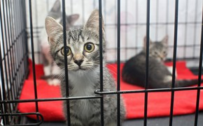 Picture pretty, look, cage