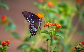 Picture flowers, nature, butterfly, wings