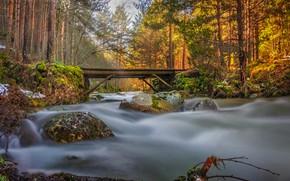 Picture forest, bridge, river, stones, stream