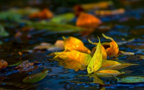 Picture in the water, autumn leaves, blur bokeh