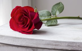Picture roses, Bud, red, rose, red rose, wood, beautiful, romantic, bud